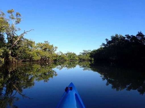 Kayaking the beautiful waterways of Tingalpa Creek, Brisbane